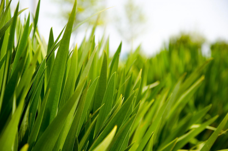 Puur Company huisstijl gras
